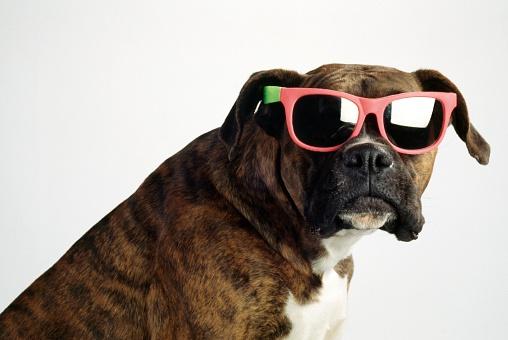 米国硬貨「Boxer wearing sunglasses」:スマホ壁紙(13)