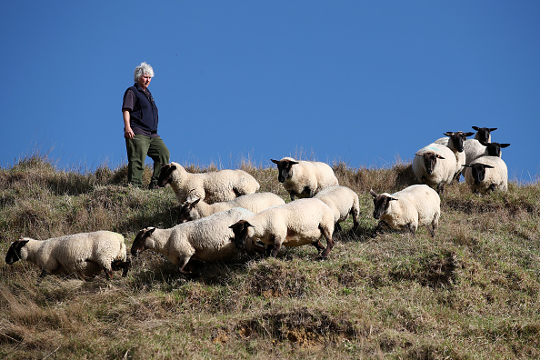 Pasture「New Zealand Sheep Farmers Face Ongoing Struggle Amid Drought And COVID-19 Lockdown」:写真・画像(4)[壁紙.com]
