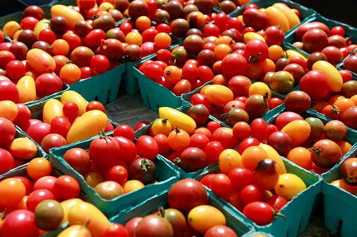 Agricultural Fair「mixed color cherry tomatoes for sale」:スマホ壁紙(10)