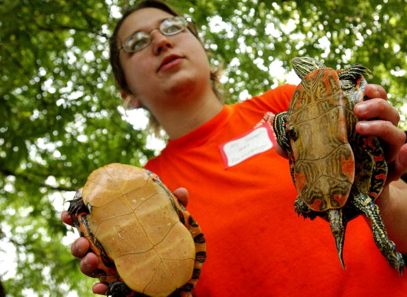 Animals In Captivity「BioBlitz Nature Project Held In New York's Central Park」:写真・画像(16)[壁紙.com]