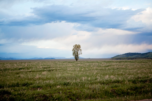 Chris Jackson「A lone tree stands sentinal amid the vast grasslands of the Jackson Hole valley, Wyoming」:スマホ壁紙(1)