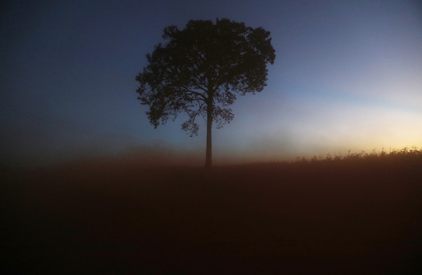 Amazon Rainforest「Fighting Recession, Level of Deforestation in Brazil Reaches Nine Year High」:写真・画像(7)[壁紙.com]