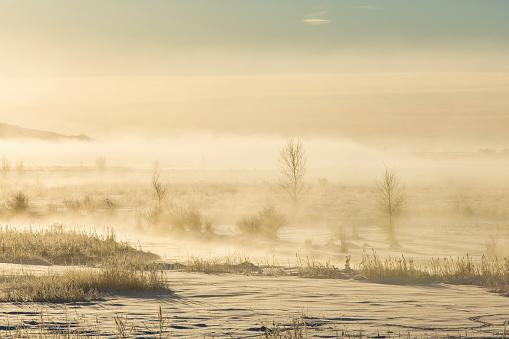The Nature Conservancy「Fog in winter landscape」:スマホ壁紙(13)