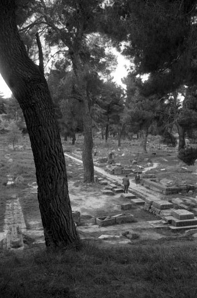 Grass「Greece」:写真・画像(16)[壁紙.com]