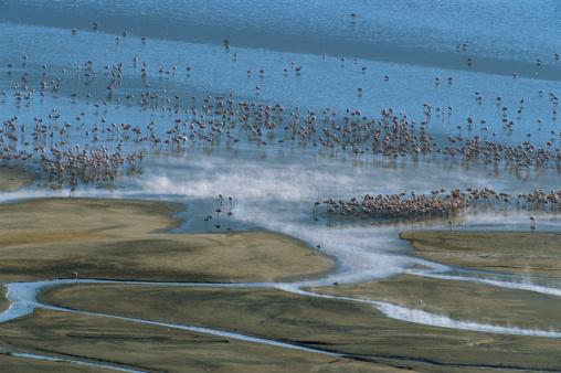 Lake Bogoria National Park「Flock of lesser flamingos (Phoenicopterus minor), elevated view」:スマホ壁紙(18)