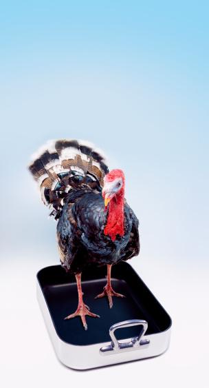 Turkey - Bird「Turkey in baking tray」:スマホ壁紙(5)