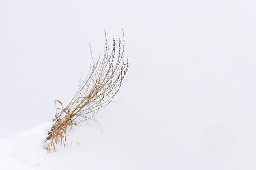 Snow「Yellow grass in snow.」:スマホ壁紙(13)