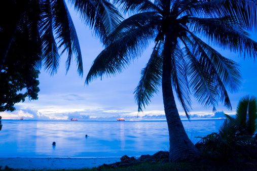 Northern Mariana Islands「Palm Tree and Beach」:スマホ壁紙(10)