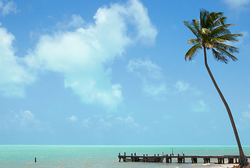 Mayan Riviera「Palm tree and wooden jetty, Mexico」:スマホ壁紙(15)