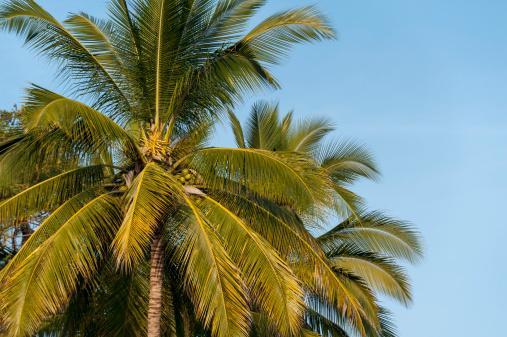 Sayulita「Palm Tree Against A Blue Sky」:スマホ壁紙(9)