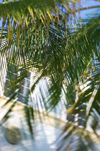 Miami Beach「Palm tree and condominium」:スマホ壁紙(11)