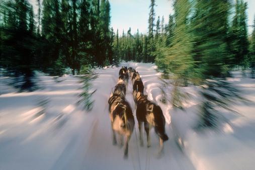 Dogsledding「Iditarod dog sled team racing in wilderness」:スマホ壁紙(17)