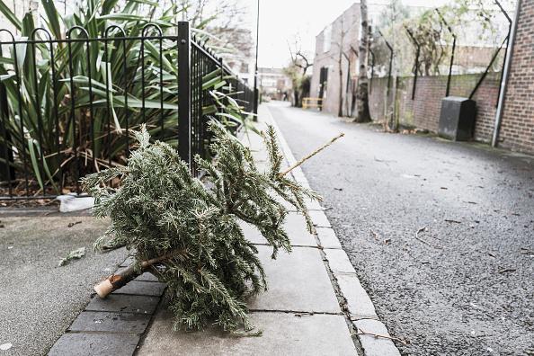 Obsolete「Lonely Christmas Trees 2017」:写真・画像(14)[壁紙.com]