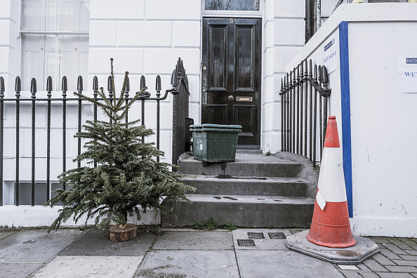 Obsolete「Lonely Christmas Trees 2017」:写真・画像(1)[壁紙.com]