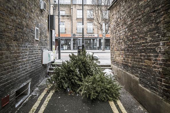 Obsolete「Lonely Christmas Trees 2017」:写真・画像(13)[壁紙.com]