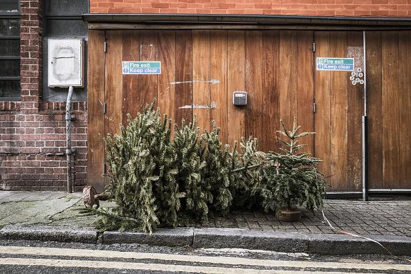 Obsolete「Lonely Christmas Trees 2017」:写真・画像(0)[壁紙.com]