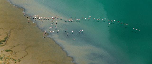 Flock Of Birds「Marismas del Guadalquivir and flamingos」:スマホ壁紙(5)