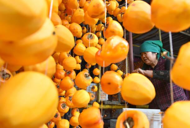 柿「Farmers Dry Persimmons During Harvest Season In Zibo」:写真・画像(15)[壁紙.com]