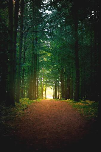 Dirt Road「The path to peace」:スマホ壁紙(7)