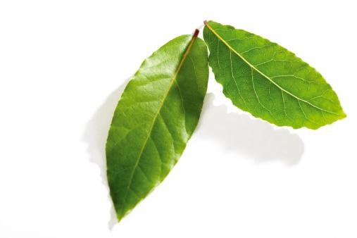 Bay Leaf「Indonesian bay-leaf, waplers, syzygium polyanthum, Eugenia polyantha」:スマホ壁紙(11)
