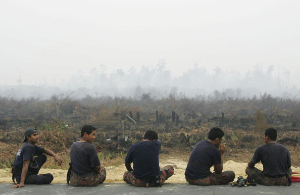 膝から上の構図「Haze From Wildfires Blanket Indonesian Skies」:写真・画像(2)[壁紙.com]