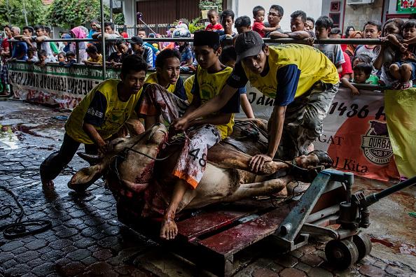 Bestpix「Eid Al-Adha Celebrations In Indonesia」:写真・画像(4)[壁紙.com]