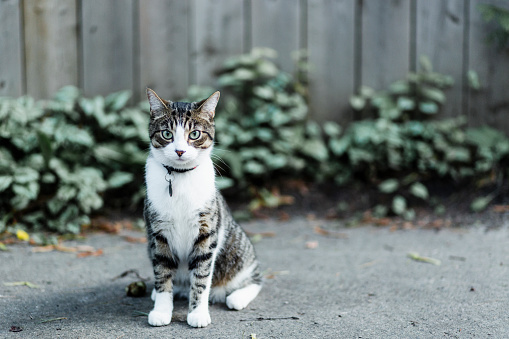 Animal Whisker「Serious cat looking at camera」:スマホ壁紙(9)