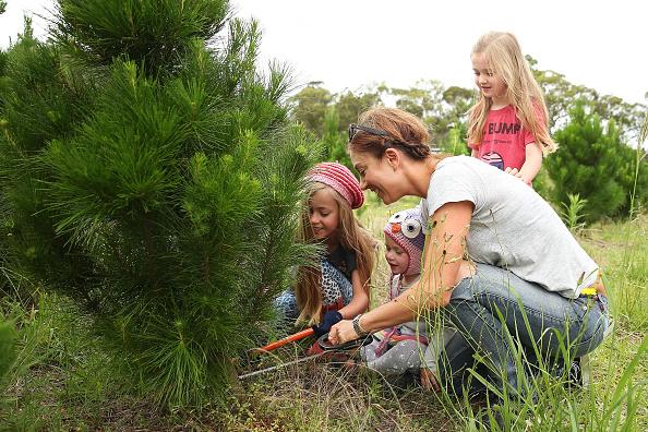 Land「Sydneysiders Head To Sydney Christmas Tree Farm」:写真・画像(18)[壁紙.com]