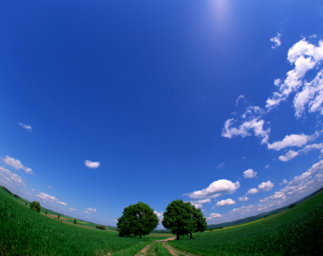 Fish-Eye Lens「Fisheye view of field with two lane dirt road」:スマホ壁紙(9)