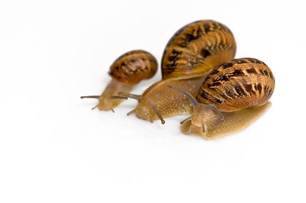 Snail line-up:スマホ壁紙(壁紙.com)