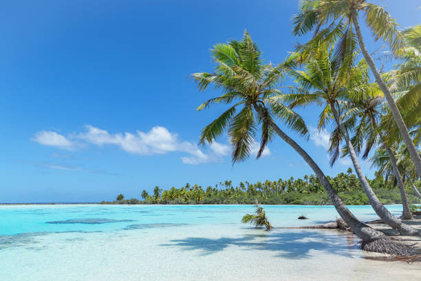 Teahatea Fakarava French Polynesia Atoll Beach:スマホ壁紙(壁紙.com)