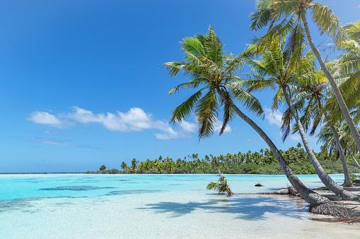 島「Teahatea ファカラバ フランス領ポリネシアの環礁のビーチ」:スマホ壁紙(19)
