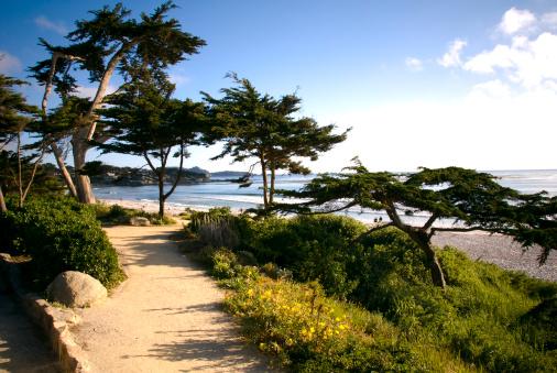 Carmel - California「Beach View Walkway, Footpath & Cypress Tree, Carmel California Scenic Coastline」:スマホ壁紙(9)