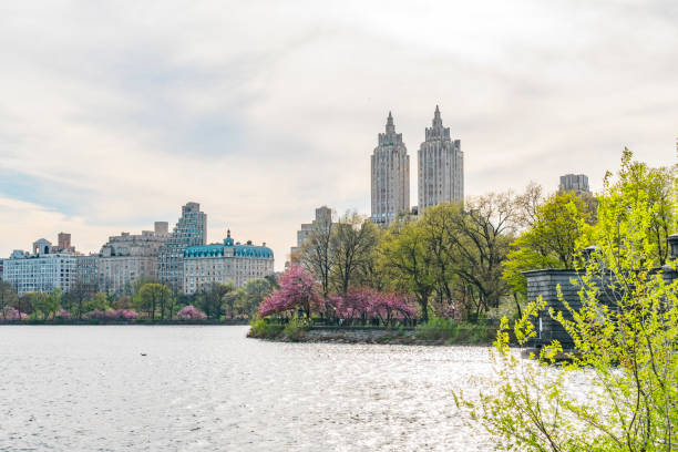 Illuminated Central Park Reservoir and Architectures of Central Park West Historic District of New York. Rows of Cherry blossoms trees are full-bloomed, and fresh green leaves are growing in springtime.:スマホ壁紙(壁紙.com)