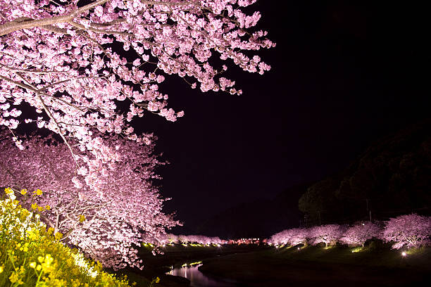 Illuminated Cherry Blossom Trees:スマホ壁紙(壁紙.com)
