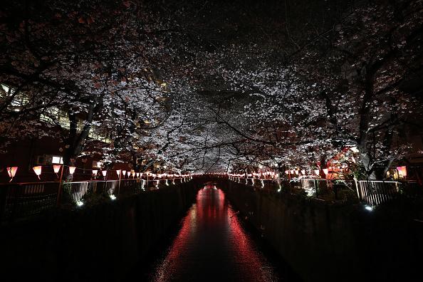 Tokyo - Japan「Cherry Blossom Season Arrives In Tokyo」:写真・画像(3)[壁紙.com]