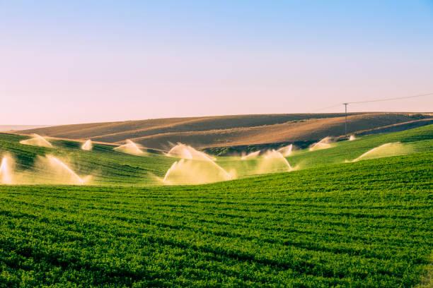 Illuminated sprinklers watering crop field:スマホ壁紙(壁紙.com)