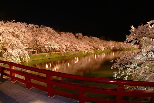 夜桜「Illuminated row of cherry trees beside river in the night, long exposure, Hirosaki city, Aomori prefecture, Japan」:スマホ壁紙(18)