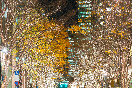 紅葉「Illuminated rows of trees stand along Marunouchi Naka-Dori Street for Christmas season, which street is surrounded by many shops and boutiques in high-rise Office Buildings at Marunouchi Chiyoda Tokyo Japan on December 12 2017.」:スマホ壁紙(15)