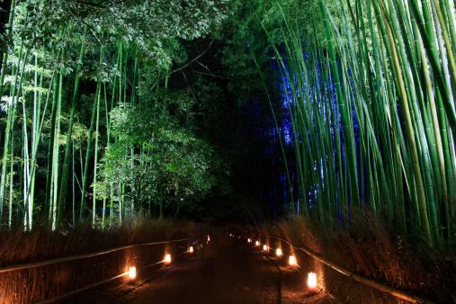 京都市「Illuminated Bamboo Grove」:スマホ壁紙(2)