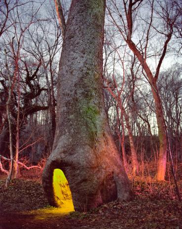 セイヨウカジカエデ「Illuminated hollow of sycamore tree」:スマホ壁紙(18)