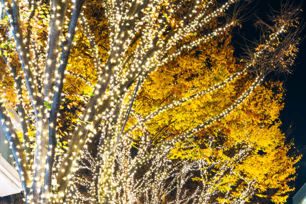 Illuminated rows of autumn leaves Zelkova Trees stand beside the fashion boutiques buildings at Omotesando Street in the night at Jingumae, Shibuya Tokyo Japan on December 05 2017.:スマホ壁紙(壁紙.com)