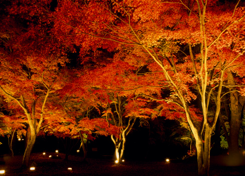 長瀞「Illuminated Autumn Leaves, Nagatoro, Saitama, Japan」:スマホ壁紙(1)