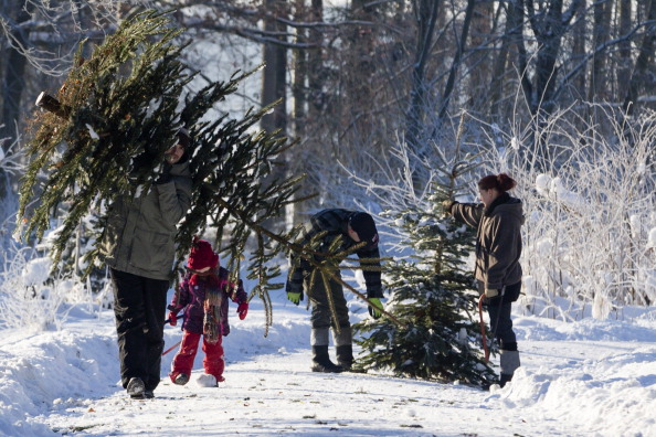 Environmental Issues「Forestries Open Christmas Tree Season」:写真・画像(18)[壁紙.com]