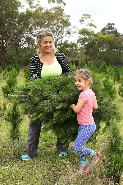 Brendon Thorne「Sydneysiders Head To Sydney Christmas Tree Farm」:写真・画像(3)[壁紙.com]