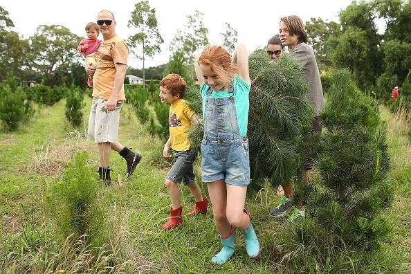 Brendon Thorne「Sydneysiders Head To Sydney Christmas Tree Farm」:写真・画像(5)[壁紙.com]