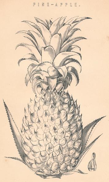 Botany「Pine-Apple」:写真・画像(12)[壁紙.com]