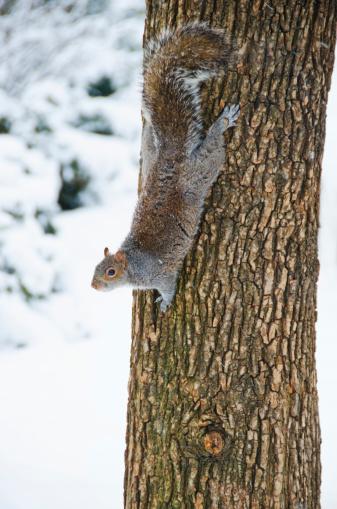 Squirrel「USA, New York, New York City, squirrel on tree trunk」:スマホ壁紙(14)
