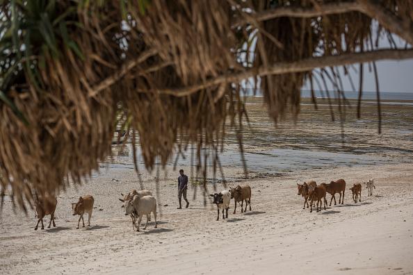 Pasture「Coast At Msambweni」:写真・画像(14)[壁紙.com]
