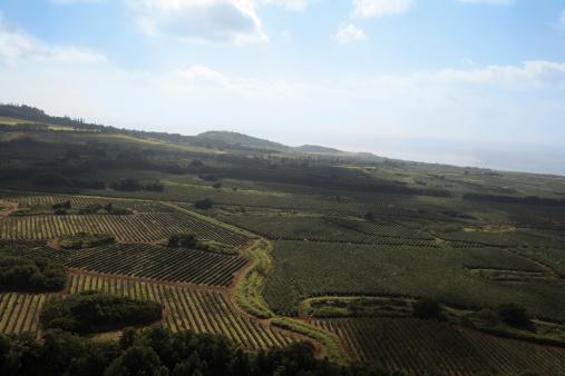 Organic Farm「Organic  plantation ariel view」:スマホ壁紙(14)